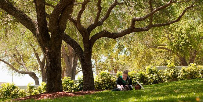students sitting under two trees