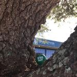 Green Dot on Campus